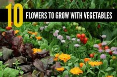 10 Flowers To Grow With Vegetables | Pairing various flowers with certain types of vegetables will help encourage insects that are beneficial for your garden and deter pests.