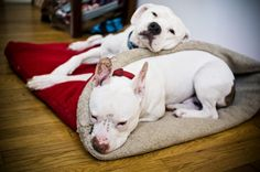 That blanket's too adorable! It's a very nice blog - Love and six foot leash :)