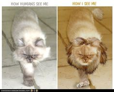 How Humans See Cats vs. How Cats See Themselves