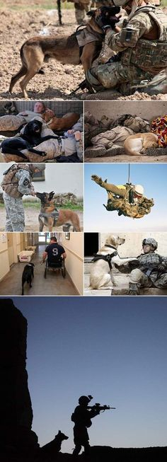 there are many ways a dog makes a fine soldier--they find and bite the bad guys, they find explosives and contraband, they find trip wires and booby traps, and they love and protect their handlers with the same level of sacrifice and loyalty that could ev