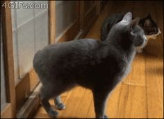"Catsenburg: :""I am the one who knocks!"""