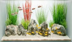 A cheap aquarium design - some ideas in 15 photos che impossible! Having a design cheap aquarium is a t â che impossible! The decorative aquarium is a small glass tray. It is a reproduction of the na. Home Decor Aquarium Design, Conception Aquarium, Design Pas Cher, Nature Aquarium, Hard Water Stains, Fake Plants