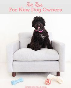 Tuesday Ten: Tips for New Dog Owners