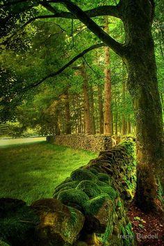Ancient Stone Fence, Lancashire, England
