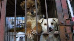 Stopping the dog/cat meat trade in Korea by the 2018 PyeongChang Olympics