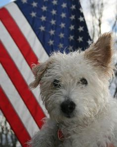Flash Fiction Writing Prompt: Yankee Doodle Doggie