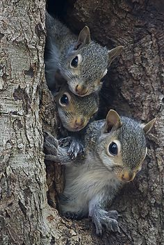 He would help all the squirrels around and one time when people were cutting down a tree and the squirrels were grabbing there babies and bringing them to my dads yard because they knew they were safe there. He did feed them peanut butter bread so they also knew where to go.