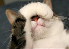 猫頭痛 CAT