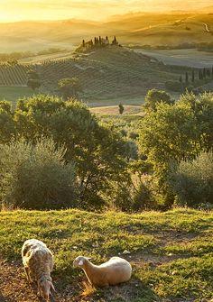 Tuscany, San Quirico d'Orcia, Italy