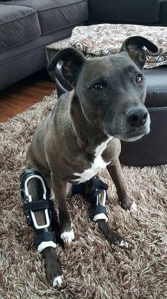 Dog Braces For Acl Tear Canada