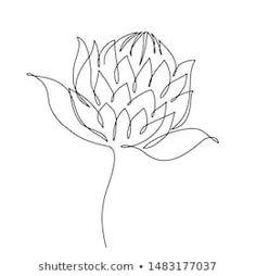 Flower Line Drawings, Botanical Line Drawing, Botanical Art, Wildflower Drawing, Wildflower Tattoo, Australian Wildflowers, Australian Native Flowers, Native Drawings, Art Drawings