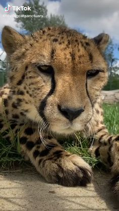 Wild Animals Videos, Baby Animal Videos, Cat And Dog Videos, Funny Animal Videos, Pet Videos, Videos Funny, Funny Animal Images, Funny Animals, Cute Animals