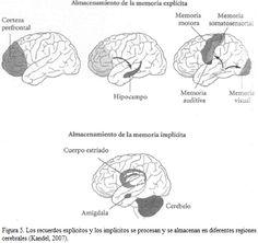 Seminario de neuroeducación