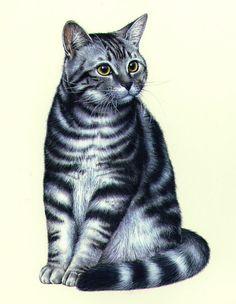 Lisa Alderson - LA CAT IN DETAIL.JPG