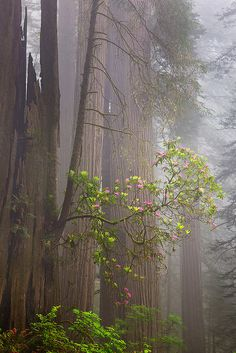 Redwood National Park (Jesse Estes)