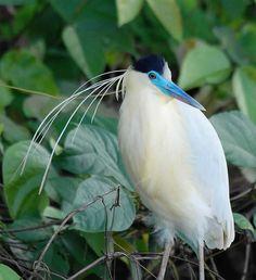 Bird in the Brazilian rainforest Amazon Rainforest Animals, Amazon Animals, Rainforest Pictures, Amazon Birds, Amazon Flowers, Amazon River, Equador, Kinds Of Birds, Landscape Photography