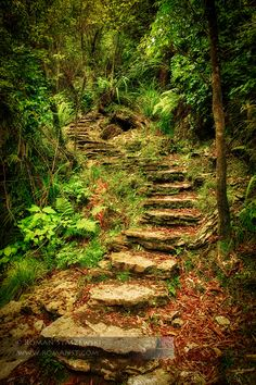 A fairy path!  I always knew New Zealand was magical! :)  (Secret Stairway to Paradise. South Island, New Zealand)