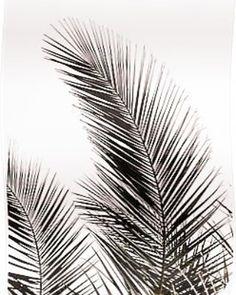 'Palm Leaves I' Graphic-Art-Print auf Leinwand Art Encadrée, Art Mural, Wall Murals, Framed Art Prints, Wall Art Prints, Reproductions Murales, Art Blanc, L Wallpaper, Bedroom Wallpaper