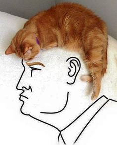 Donald Trump Cat Hair Illusion? - http://www.moillusions.com/donald-trump-cat-hair-illusion/