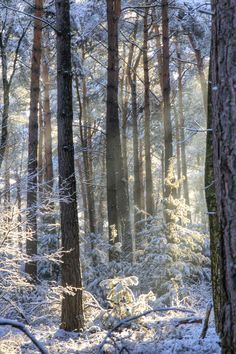 snow & sun in the forest