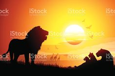Image result for pride of lions at sunset
