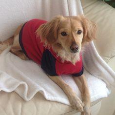Sudadera perro, camiseta perro, ropa perro. de MuckaPets en Etsy