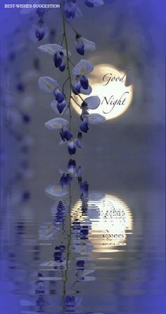 good night wishes for him sweet dreams - good night wishes for him ; good night wishes for him romantic ; good night wishes for him sweet dreams ; good night wishes for him quotes ; good night wishes for him text ; good night wishes for him beautiful Good Night Quotes Images, Good Night Prayer Quotes, Beautiful Good Night Images, Romantic Good Night, Good Night Messages, Night Love, Good Morning Good Night, Good Morning Images, Good Night Moon