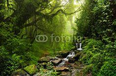 Zdjęcia na płótnie, fototapety na wymiar, obrazy na ścianę : Selva de Nepal