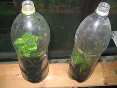 Farmer, Glass Vase, Amazing, Plants, Home Decor, Google, Flowers, Decoration Home, Room Decor