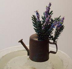 Miniature lavender