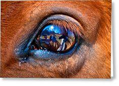 Title- Seen Through A Horse's Eye