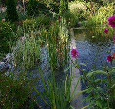 Tips for Building Ponds in Your Backyard - My Backyard ideas Backyard Water Feature, Ponds Backyard, Garden Pool, Water Garden, Swimming Pool Pond, Natural Swimming Ponds, Natural Pond, Pool Water Features, Water Features In The Garden
