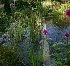 natural pool, water garden