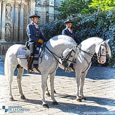 The Carthusian is a family in the PRE breed, considered the closest to the first modern Andalusians. They are mainly grey, but occasionally, black and bay can appear. Img: Caballos Cartujanos Pura RAZA Española de la Yeguada de la Cartuja
