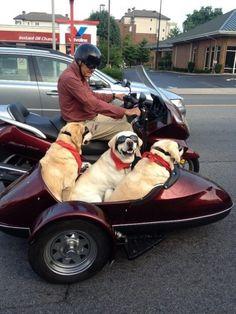 Insegnamenti dei nostri adorati cani per affrontare ogni giorno con il sorriso