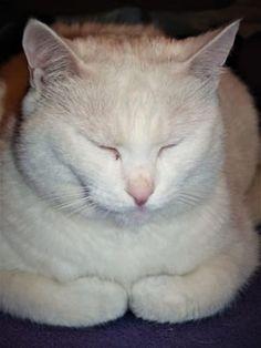 Vánoční cukroví pro psy a kočky: máte doma pejska nebo kočičku? Upečte jim cukroví a uvidíte tu radost Cats, Animals, Drink, Gatos, Animaux, Animales, Cat, Kitty, Animal