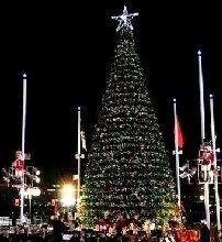 Synchronized Nightly Tree Light Shows Jacksonville, FL #Kids #Events