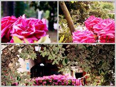 Llega Septiembre, pero parece que nuestras flores se niegan a aceptarlo. Lucen así de bonitas ;)  #liebana #cantabria #flores