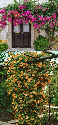 Favorite Flowering Vines and Climbing Plants favorite easy-to-grow fragrant flowering vines for year-round beauty. Plant them for an arbor, pergola or fence to create gorgeous outdoor rooms! - A Piece Of favorite easy-to-grow fragrant flower Fast Growing Flowers, Fast Growing Vines, Climbing Plants Fast Growing, Climbing Flowers, Climbing Vines, Climbing Flowering Vines, Climbing Wall, Patio Pergola, Backyard Landscaping