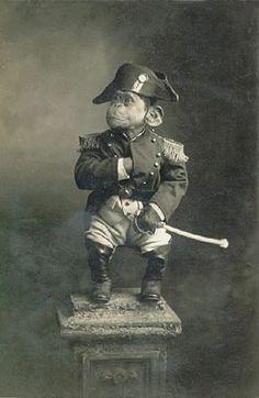 primate emperor