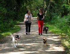 Education, dog-friendly neighborhoods could tackle obesity  Sciencedaily.com