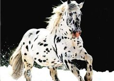 raças de cavalos raros - Pesquisa Google