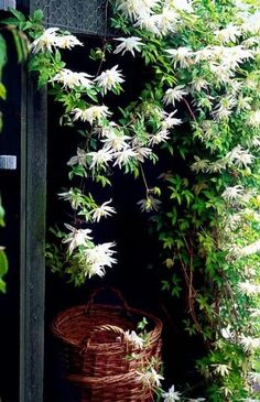 Storage is necessary and will take place - but it is possible to make something beautiful of it, for example, wrap a shed with clematis 'Albina Plena'. Moon Garden, Dream Garden, Garden Pots, Beautiful Gardens, Beautiful Flowers, Backyard Ideas For Small Yards, Backyard Designs, Clematis Vine, Climbing Vines