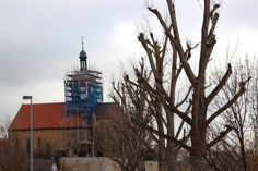 2012-03-06: trees and church