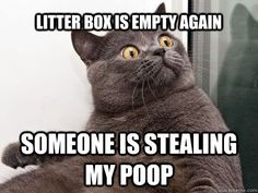 #cleanfeetpetcleanup Omaha Pet Waste Removal! http://www.cleanfeetpetcleanup.com/cats