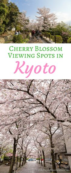 Cherry Blossom Viewing Spots in Kyoto- Our 6 Favourite Locations (Blog Post, travelyesplease.com) | #Kyoto, #Japan, #Asia