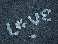 flower love daisy