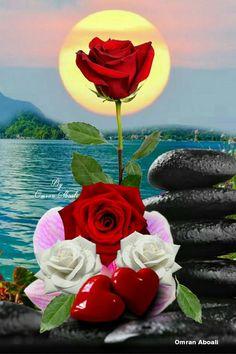 Beautiful Landscape Wallpaper, Beautiful Flowers Wallpapers, Beautiful Rose Flowers, Beautiful Flower Arrangements, Romantic Flowers, Beautiful Moon, Beautiful Landscapes, Flowers Nature, Rose Images