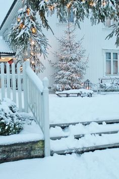 Snow & Lights