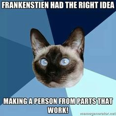 Frankenstien had the right idea making a person from parts that work! #ChronicIllnessCat